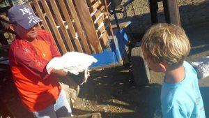 P1050809-Hühnerverkauf-klein